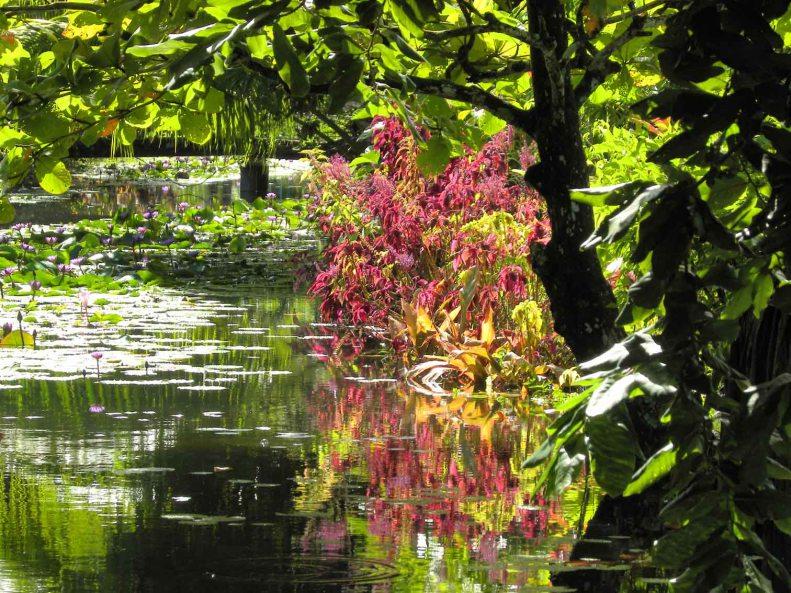 Freshwater garden pond on Tahitian seashore, French Polynesia.
