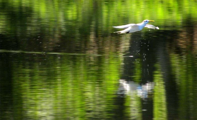 SB10 Whitt Birnie seabirds