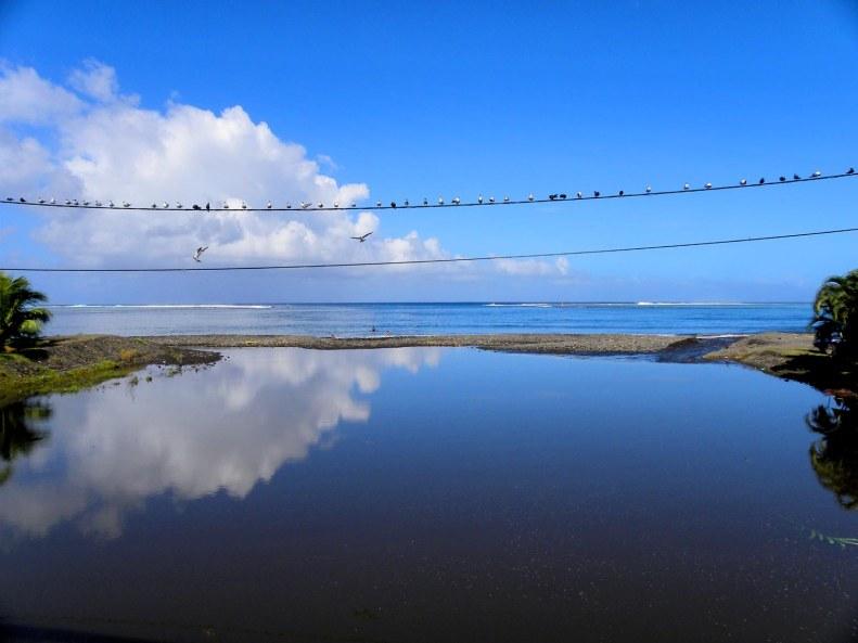 SB11 Whitt Birnie. Southwest coast, Tahiti, Tahiti-iti. Seabirds and the internet.